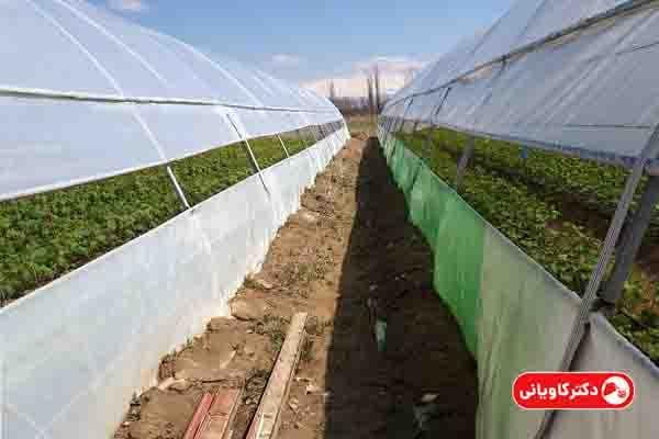 گلخانه یکی از ایده های پولساز در روستا