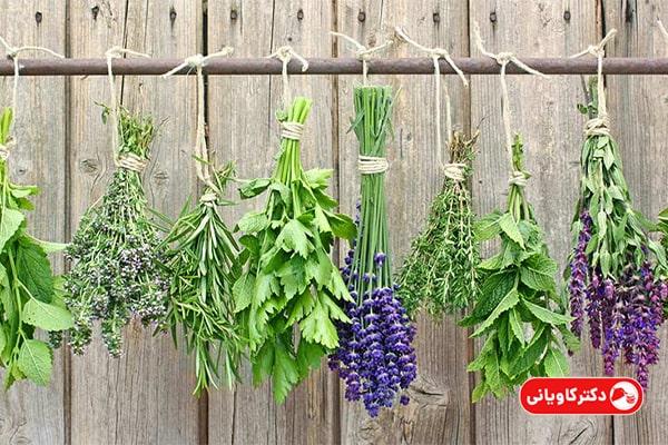 پرورش گیاهان دارویی از ایدههای پولساز خانگی