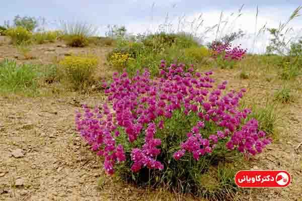 تولید گیاهان دارویی یکی از ایده های پولساز در روستا