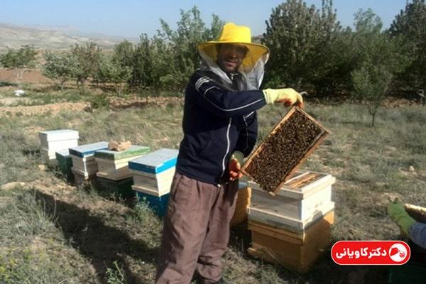 فروش عسل یکی از ایده های پولساز در روستا